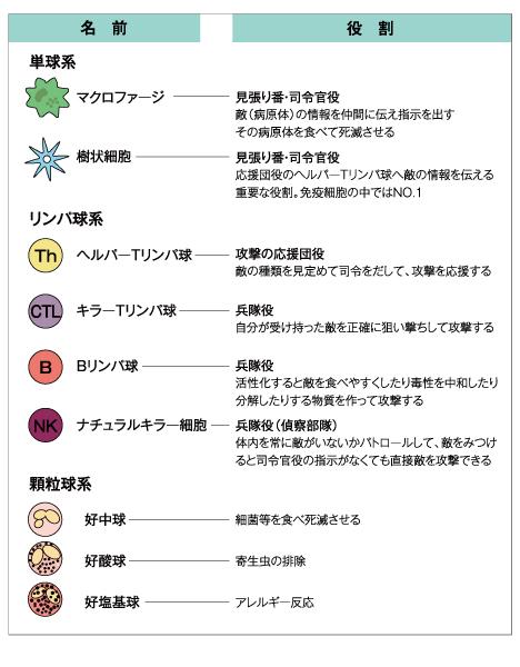 白血球 の 働き